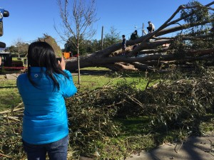 Downed Tree becomes an attraction for neighborhood kids! Wednesday, December 31st, 2014
